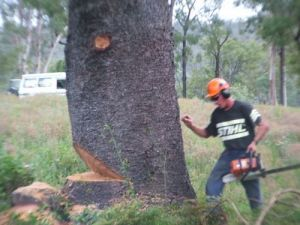 Steve Smith Chainsaw Training - Melbourne Private Schools